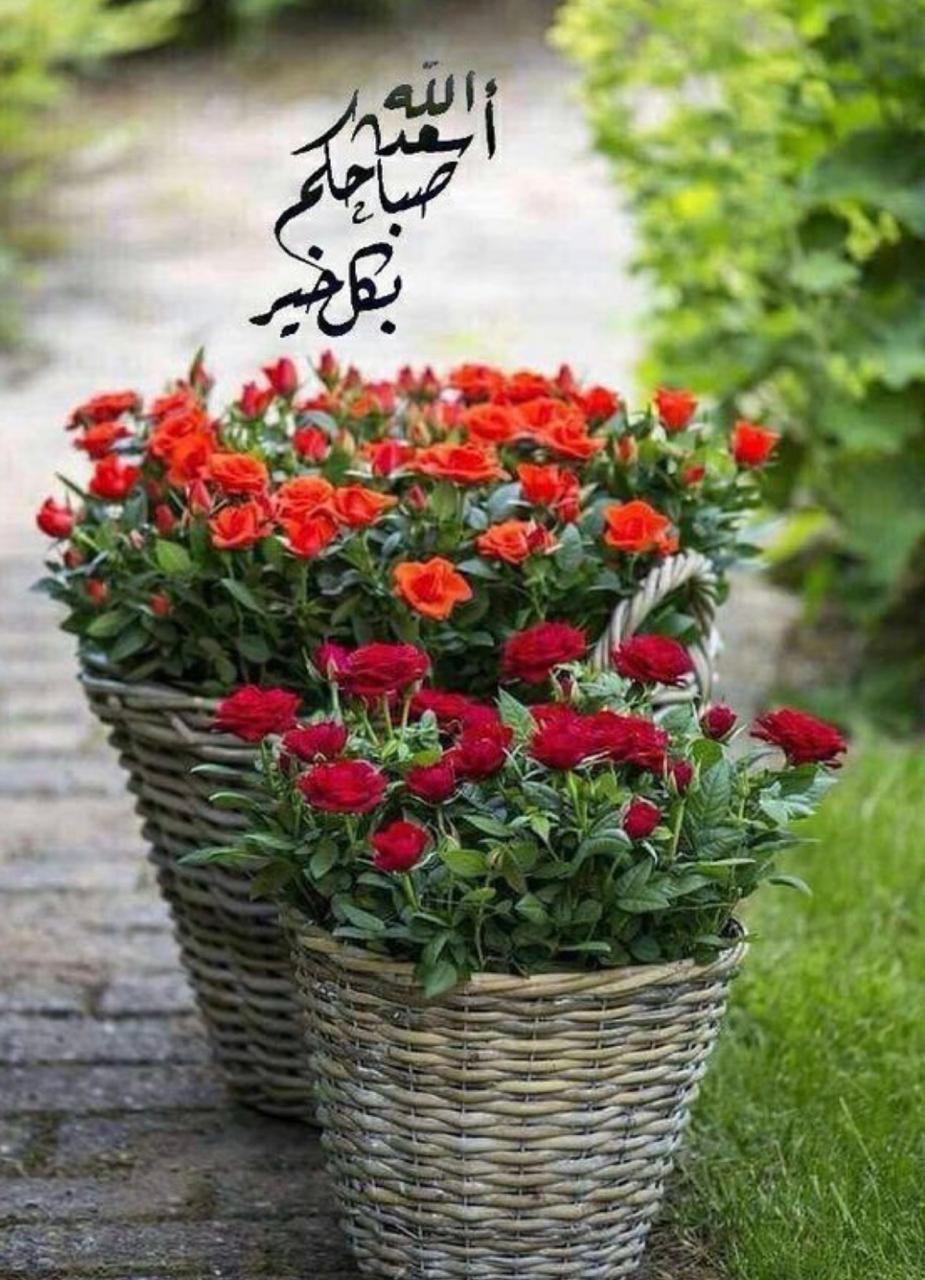 Pin By Halima Drira On صلوات على محمد واله و صباحياة In 2020 Beautiful Roses Decorative Wicker Basket Wicker Baskets