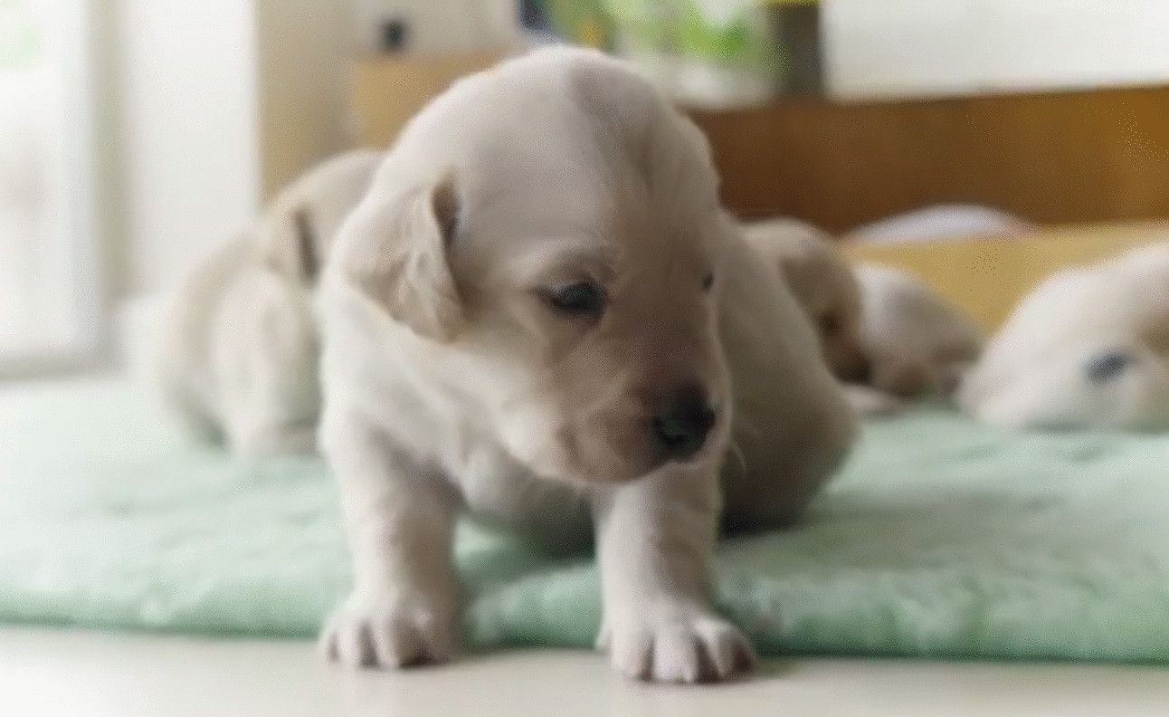 Cute Alert Puppies Open Their Eyes For The First Time Video The