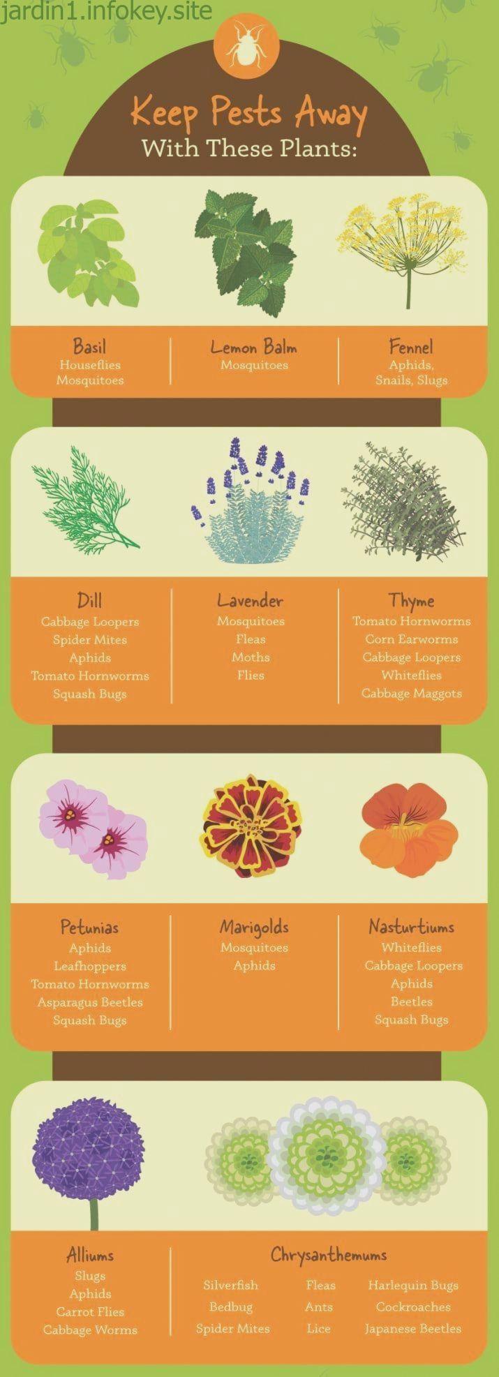 #Brassica #brune #Container Vegetable Gardening Cheat Sheets #dAsie #est # -#brassica #brune #cheat #container #dasie #est #gardening #sheets #vegetable
