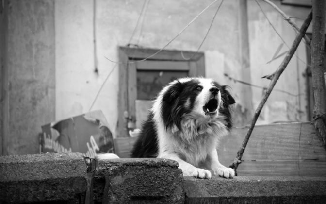 How to Treat Excessive Barking DOGS BEHAVIOR Animal