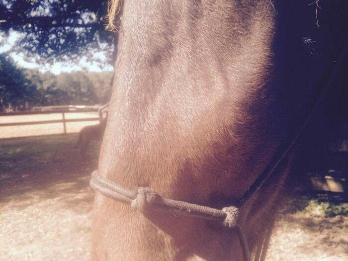 If your horse had this swelling on his face, what would ...