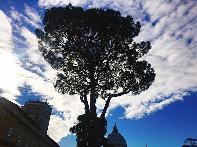 유럽여행 8일차, 이탈리마 로마 바티칸 박물관 외부 나무와 하늘, 바티칸 투어