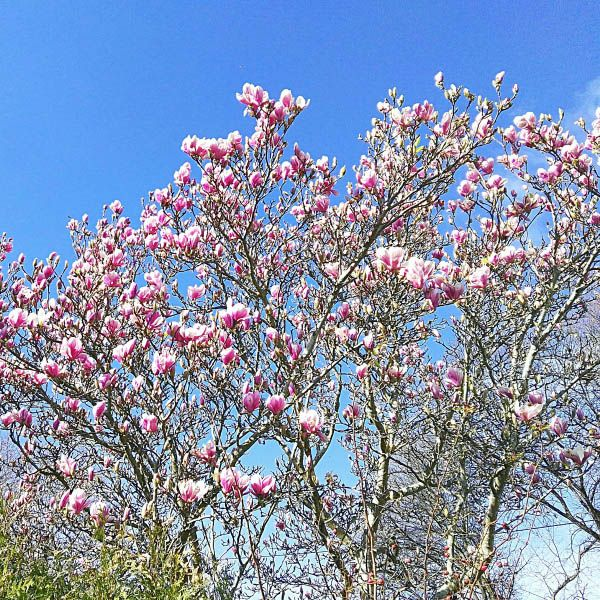 Primavera, flores y refranes. Visita jasclaire.com