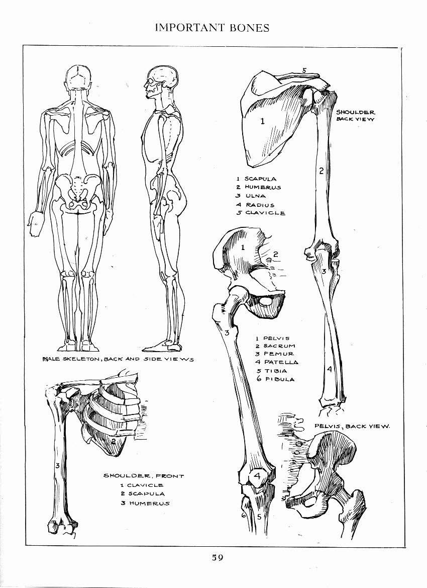 Andrew Loomis. | AnatoRef - Art Anatomy & Reference | Pinterest ...