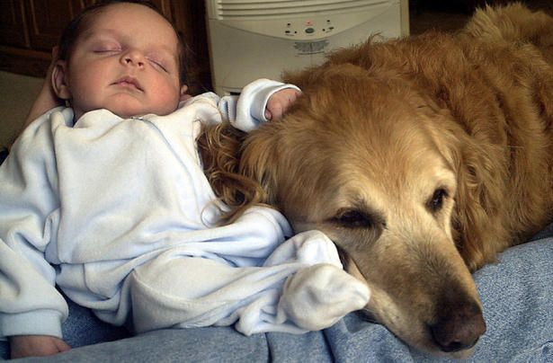 Family dog helps make baby healthier - thestar.com