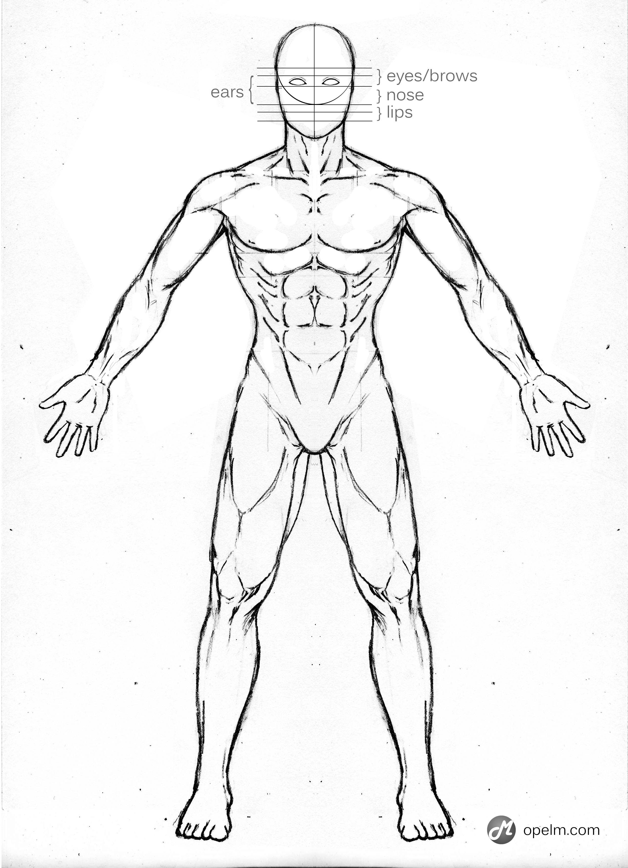 Drawn Anatomy Diagram