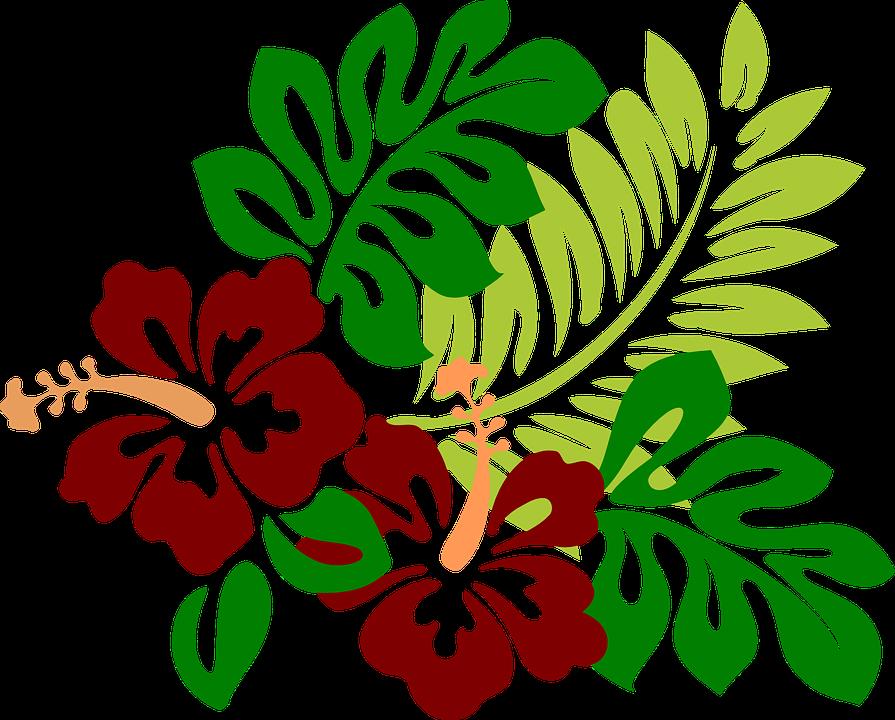 Kostenloses Bild Auf Pixabay Hibiskus Blumen Rot Tropisch