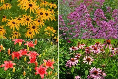 A List Of Perennial Flowers That Bloom All Summer With Pictures