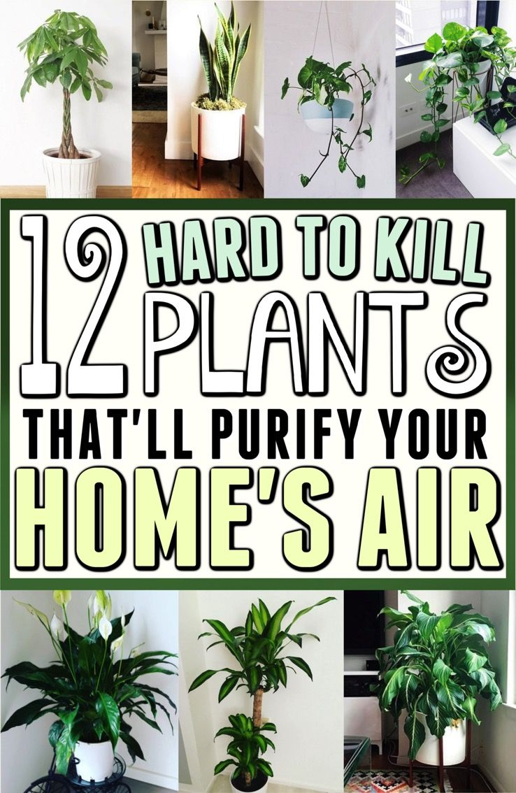 12 Amazing Looking Air Purifying Plants You Need in Your Home is part of Indoor plants clean air, Plants, Air purifying plants, Indoor plants, Clean air, Indoor garden - Alright guys, lately I've become a bit interested (totally an understatement) in house plants  When I was younger, I thought they were…