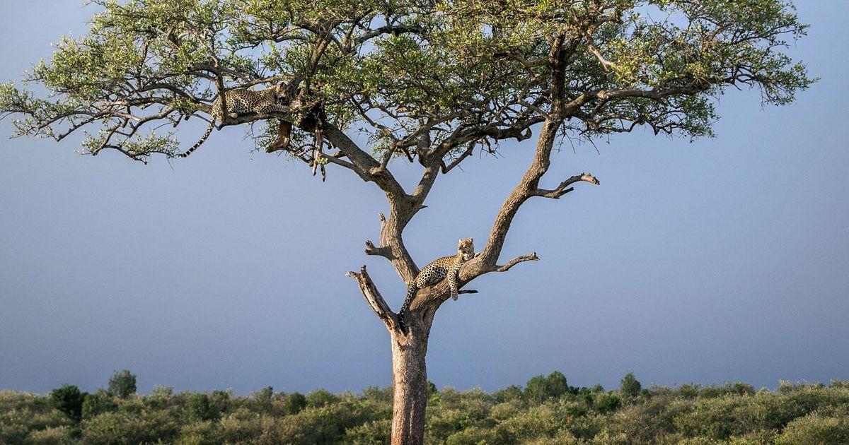 The incredible pictures were taken by German photographer Ingo Gerlach, in Maasai Mara, Kenya