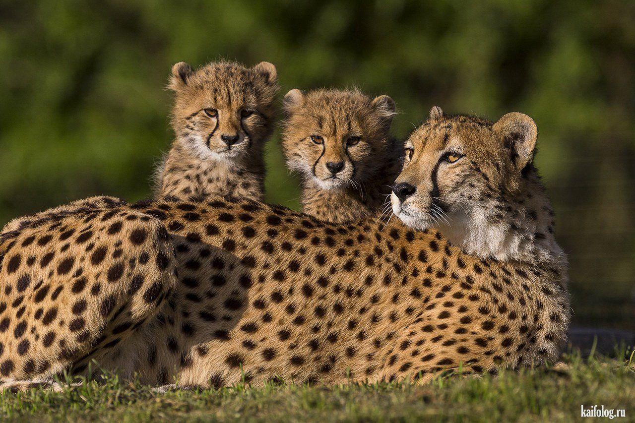 Самые красивые фотографии (55 фото) | Животные, Детеныши ...