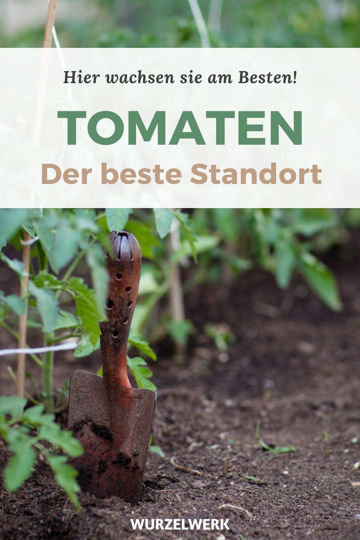 Die Beste Art Tomaten Zu Pflanzen Im Freiland Gewachshaus In 2020 Tomaten Garten Tomaten Pflanzen Pflanzen