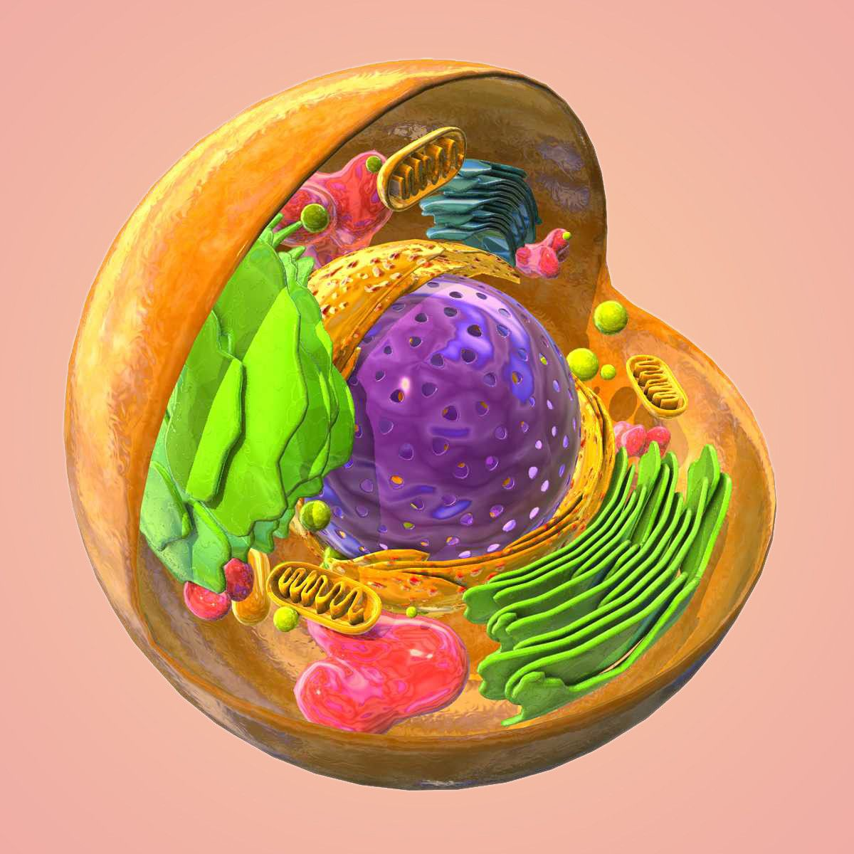 animal cell 3D Models   TurboSquid.com   Animal cell ...