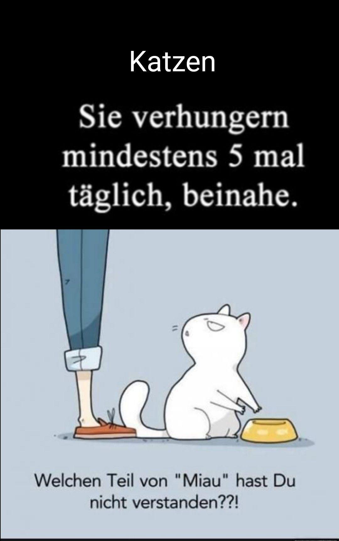 Pin Von A Santa Auf Spruche Leben 1 Echt Witzig Lustige Spruche Katze Lustig