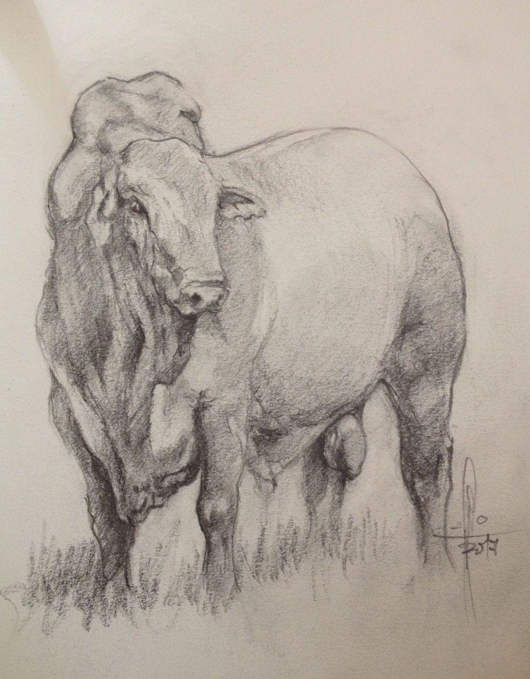 Dibujo De Toro A Lápiz Por Francisco Javier Abellan Animal