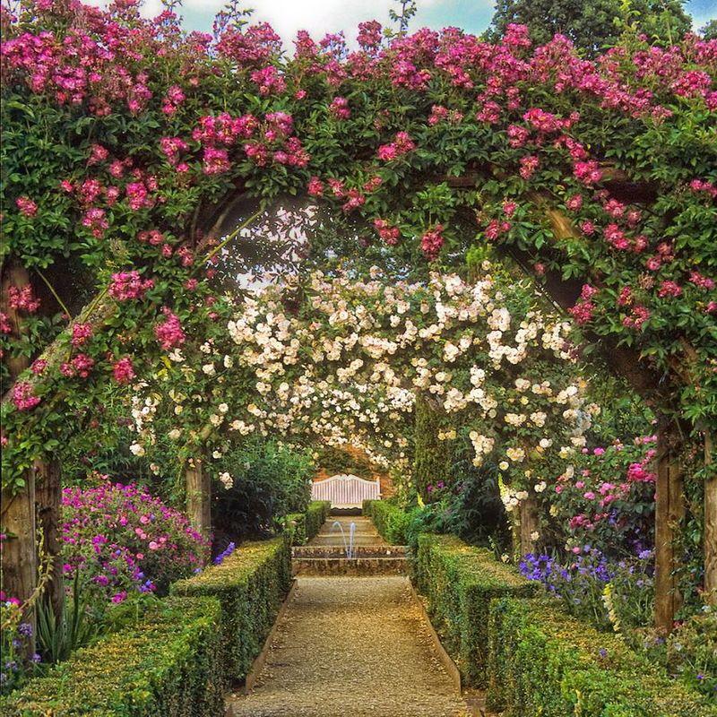сад роз христа картинки кто сказал