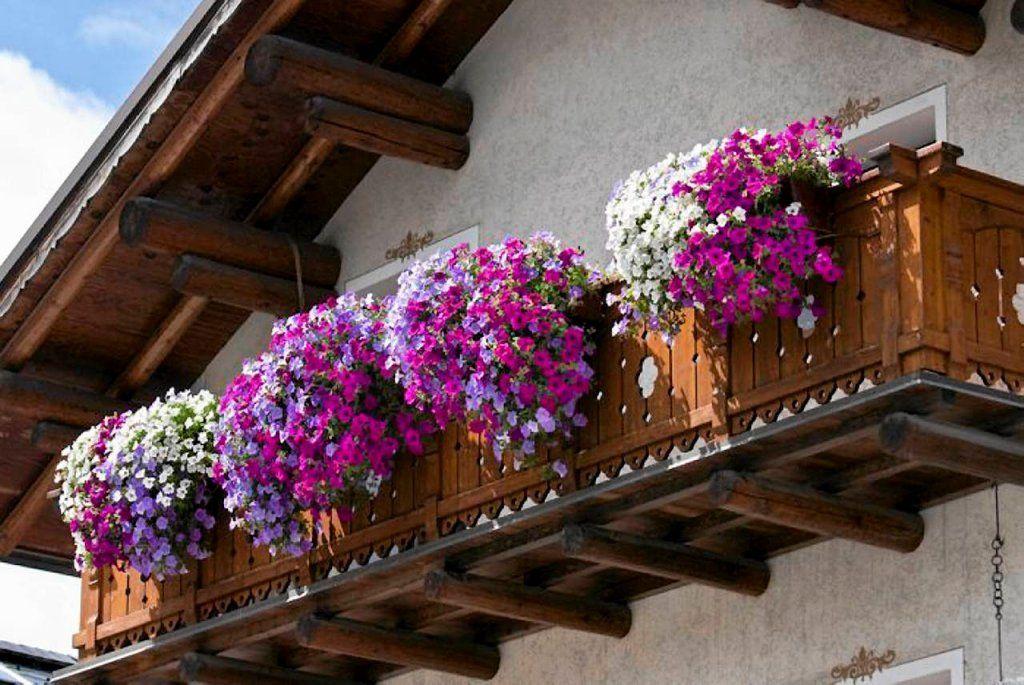 Najlepsze Kwiaty Na Balkon Jakie Rosliny Sprawdza Sie Na Balkonie Balcony Flowers Planting Flowers Small Balcony Design