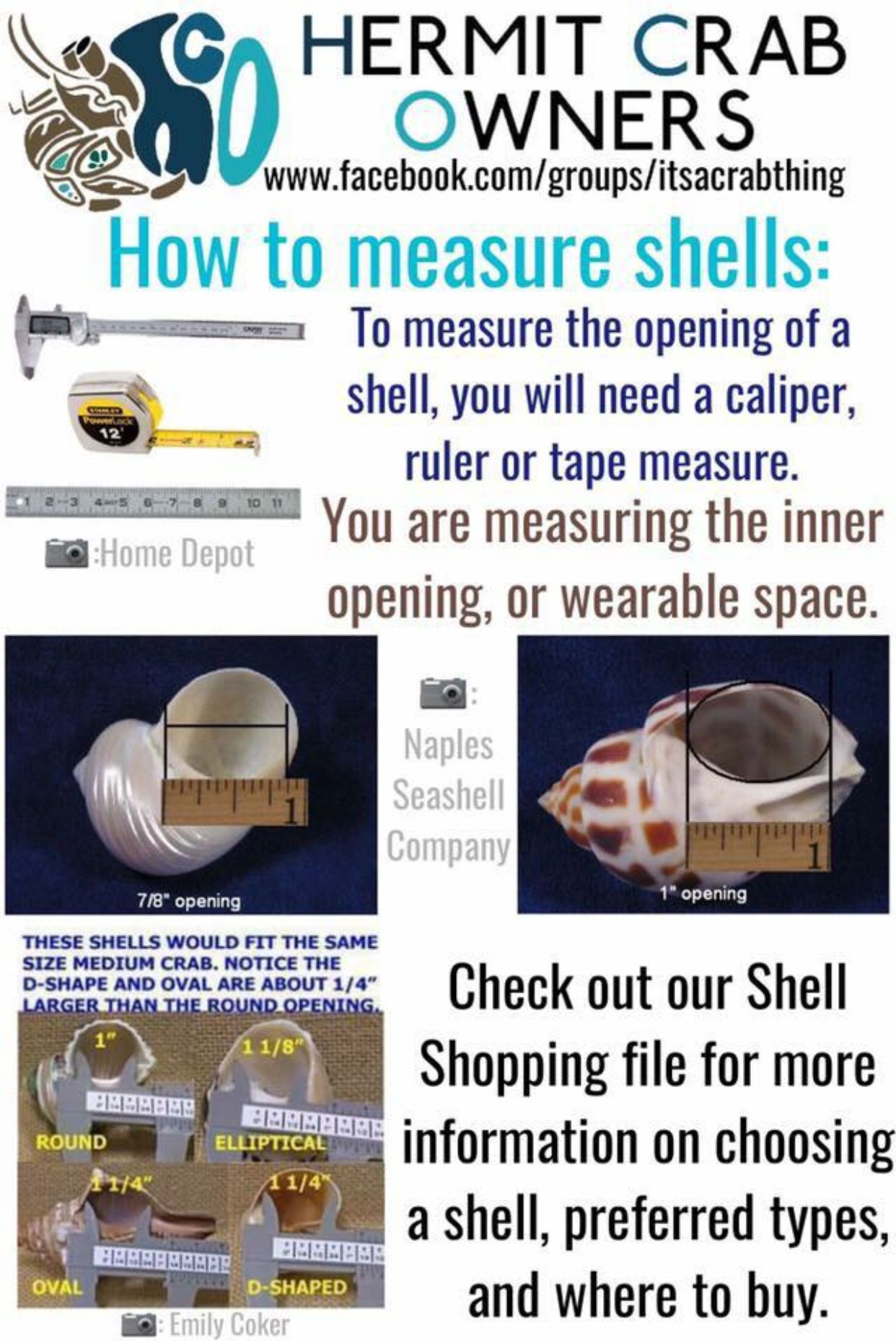 Pin About Hermit Crab Homes Hermit Crab Shells And Hermit