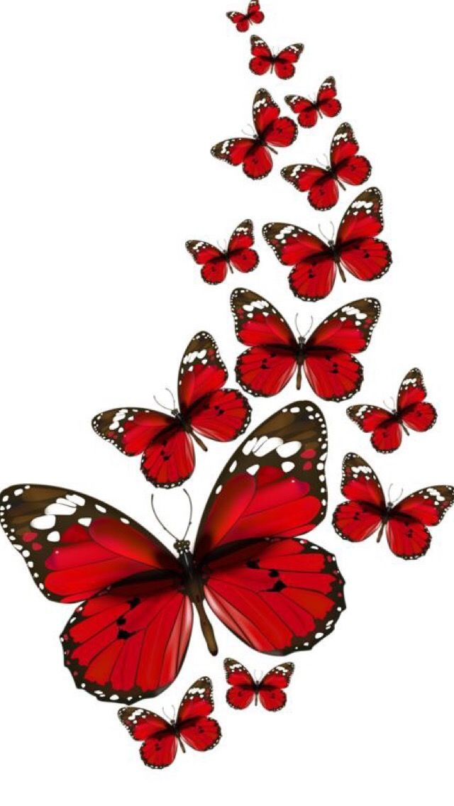 Iphone Wallpapers Oboi Butterfly Pictures Butterflies Vector Red Butterfly