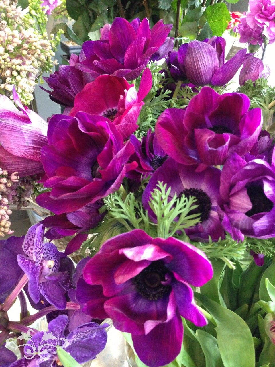 Anemones Stunning Spring Flowers At Neill Strain Floral Couture