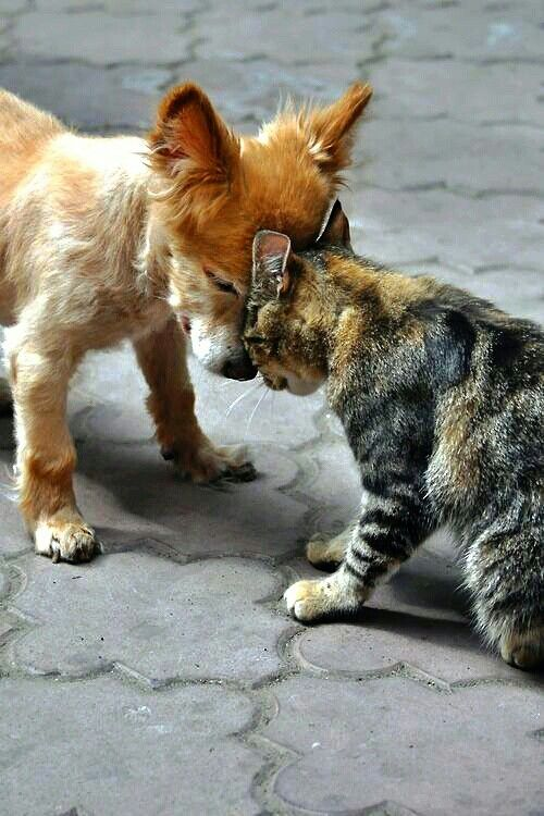 COMO EL PERRO EL GATO Animals Pinterest Animal Cat And Dog - Dogs annoying cats with friendship