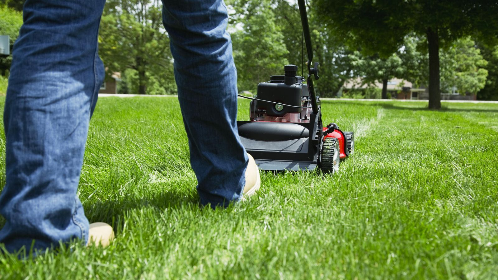 How to maintain your lawn during the summer is part of lawn Tips How To Make - Cutting, watering and mulching tips to keep grass green in the heat