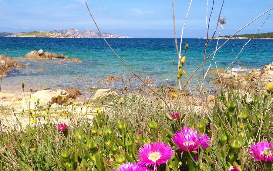 Pin Auf Baia Sardinia Beaches Spiagge Strande