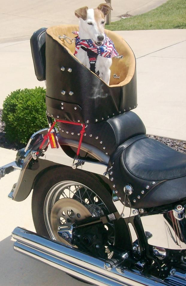 dog carrier for motorcycle