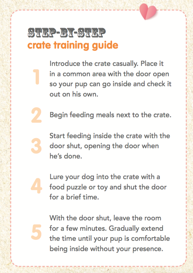 Crate Training Your Puppy Follow This Step By Step Create Training Guide From Petplan Pet Insurance T Training Your Puppy Crate Training Pet Insurance Reviews