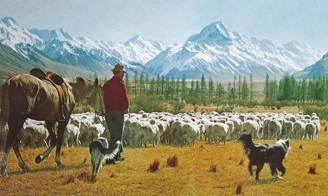 Resultado de imagen de new zealand lambs painting