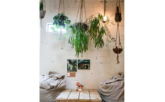 Plantas em vasos pendentes
