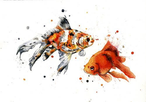 Google Image Result for http://samharveyart.co.uk/PhotoAlbums/album_1254588932/Fancy_Goldfish.jpg