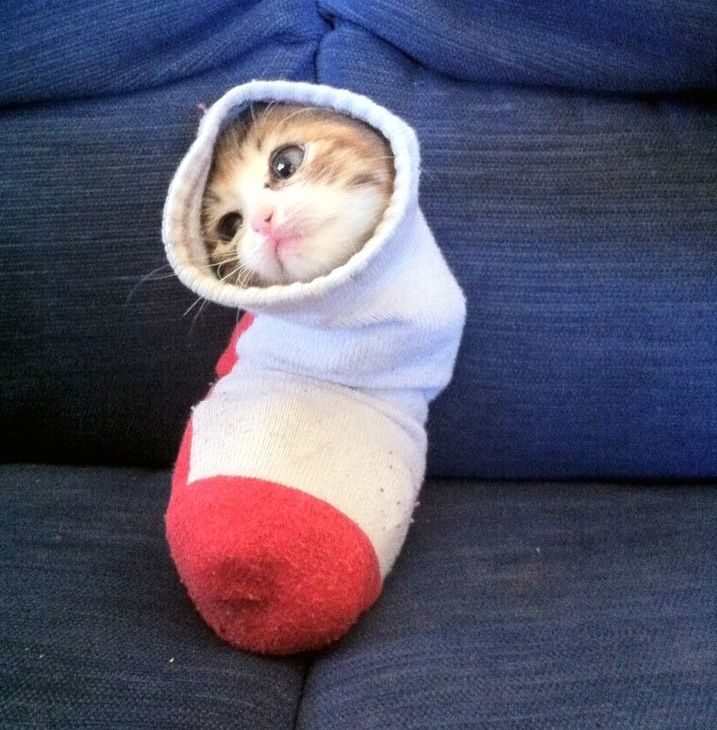 Kitten S Full Body Cast Revealed To Be A Tube Sock Cute Animals Funny Animal Pictures Funny Animals