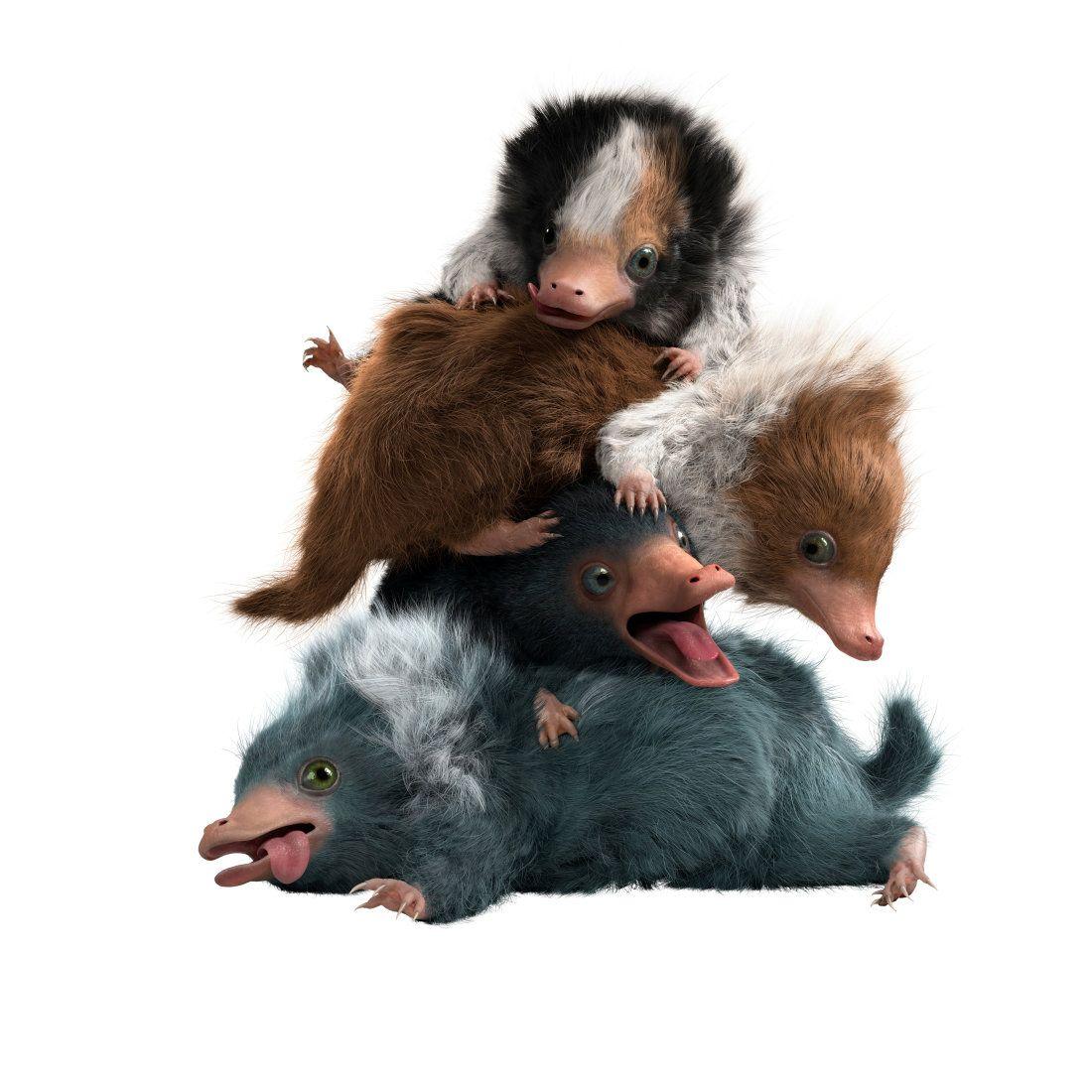 Baby Nifflers From Fantastic Beasts The Crimes Of Grindelwald Fantastische Tierwesen Phantastische Tierwesen Tierwesen