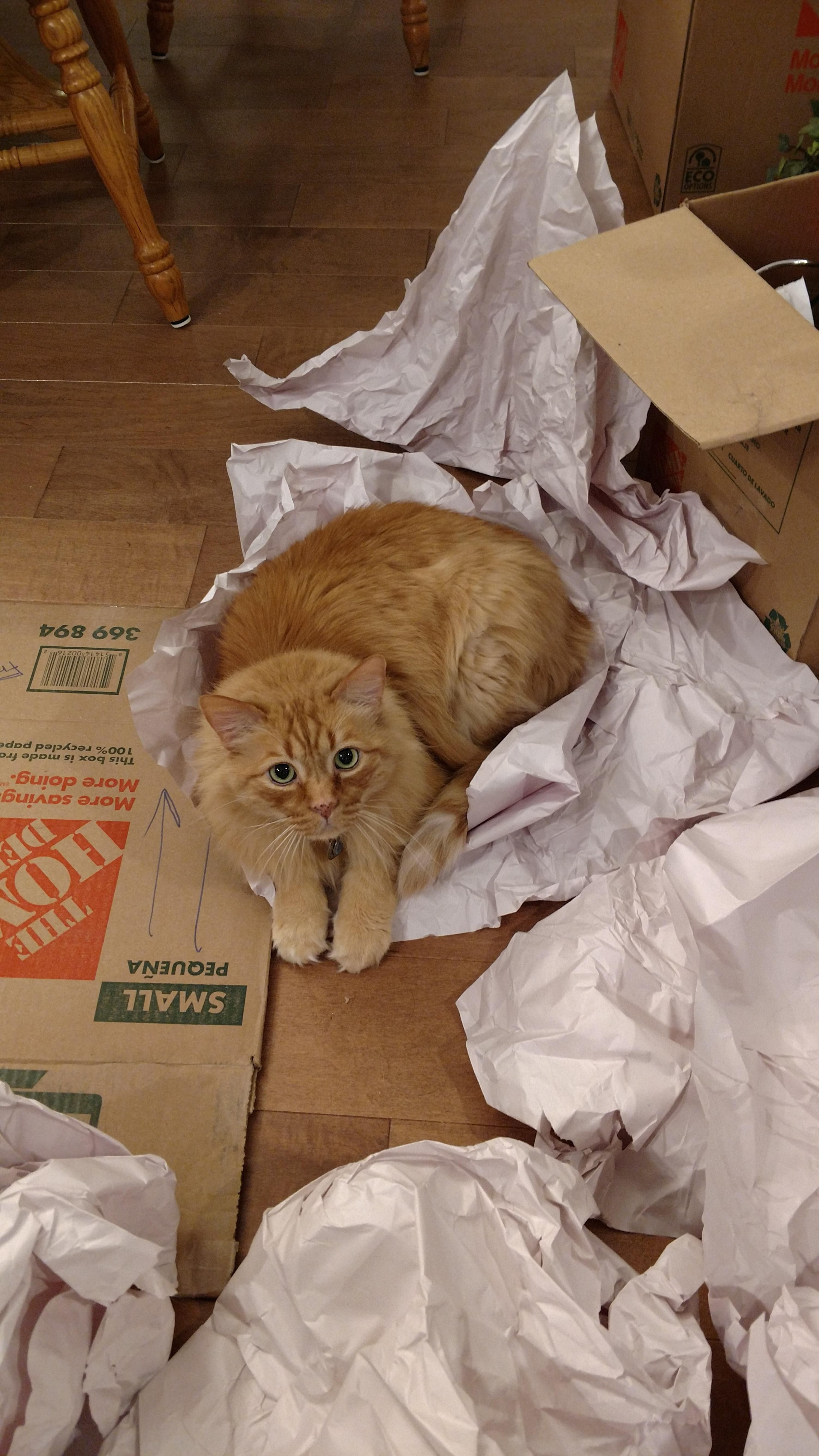 Over 12 Years Old And Still Acts Like A Kitten With Paper It S All His Http Ift Tt 2sybsnw Kitten Funny Cats 12 Year Old