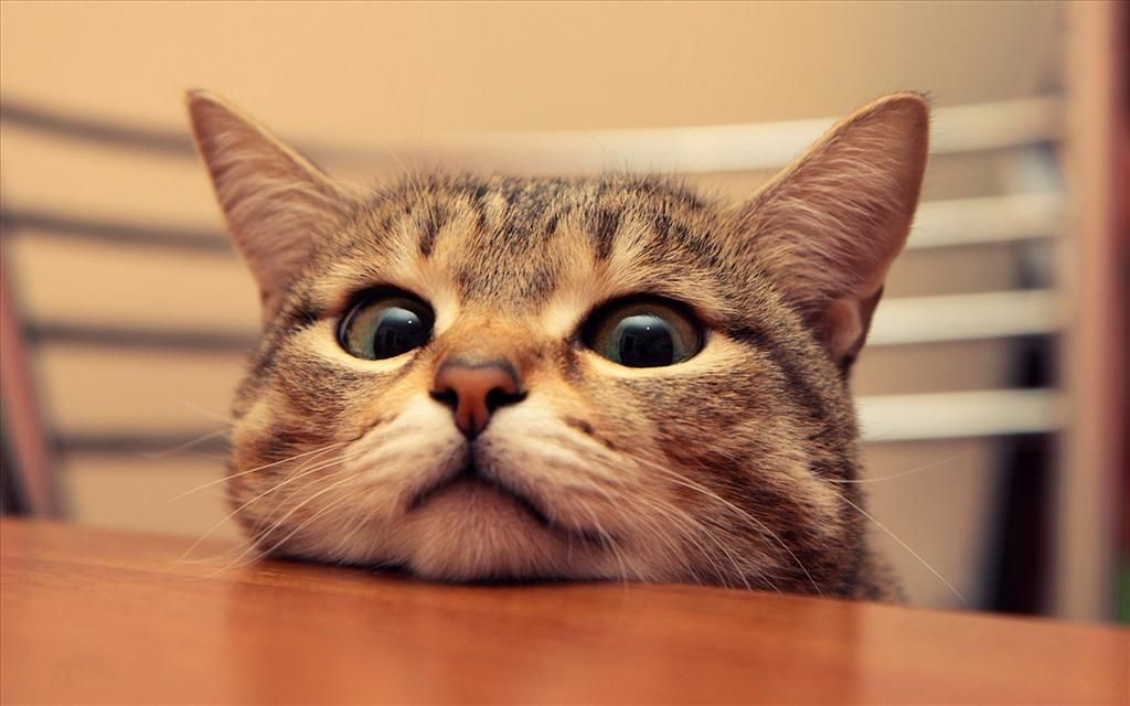 Telecharger Gratuitement Ce Fond D Ecran Tete De Chat Mignon Video Drole Chat Animales