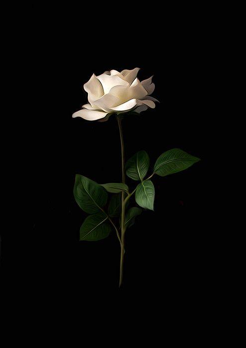 List of Premium Black Wallpaper Iphone Dark Rose for iPhone XS Max 2020