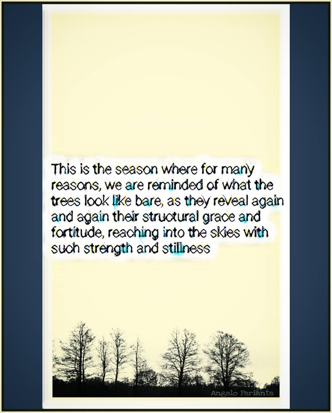 This is the season where for many reasons we are reminded of what the trees look like bare as they reveal again and again their structural grace and fortitude reaching in...