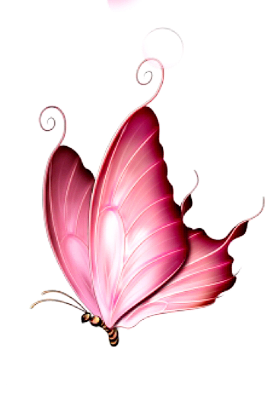 Pin Von Andre Auf Embalagem Schmetterling Malen Schmetterling Zeichnen Schmetterlingszeichnung