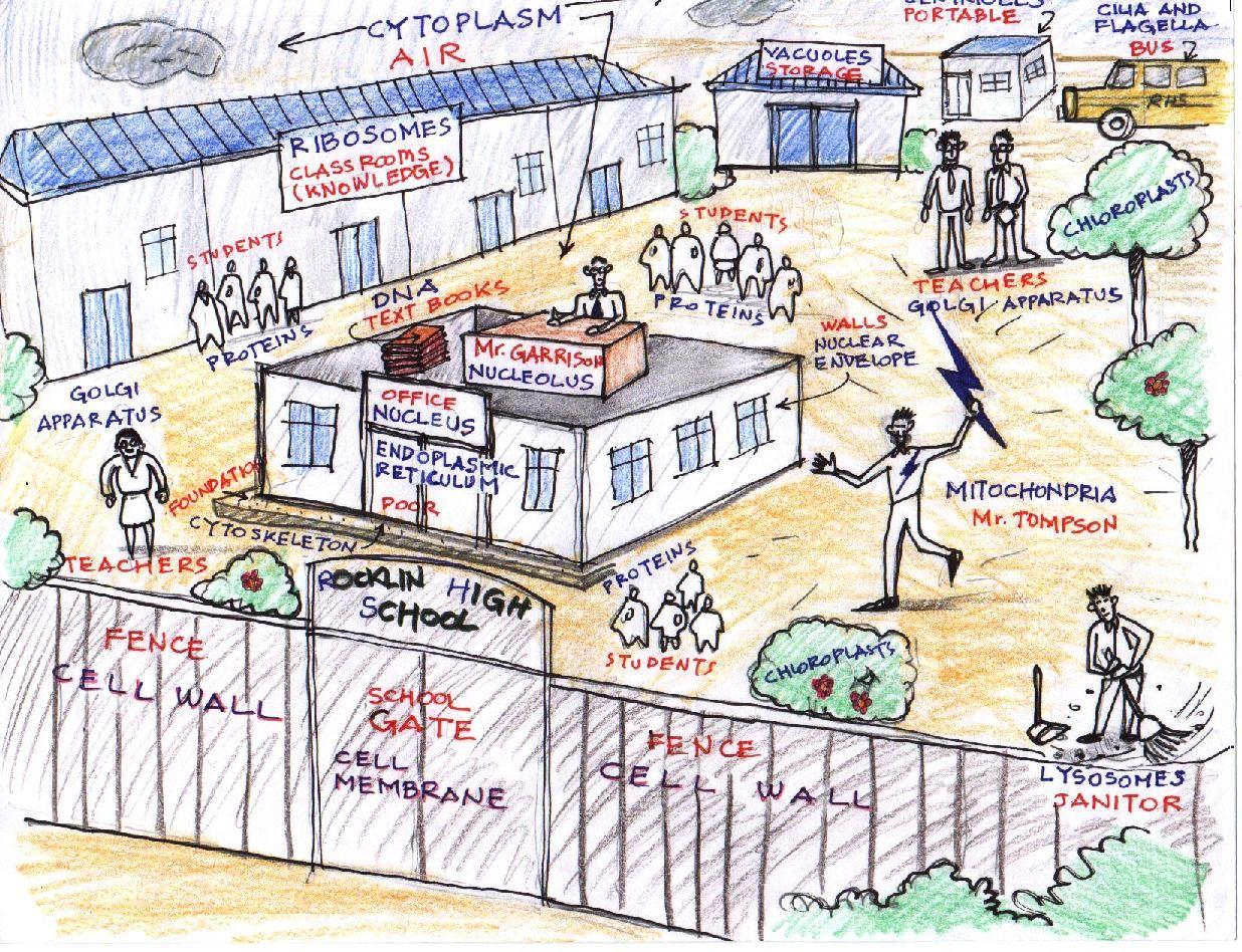medium resolution of AngelaBassalCellasaSchool.jpg 1