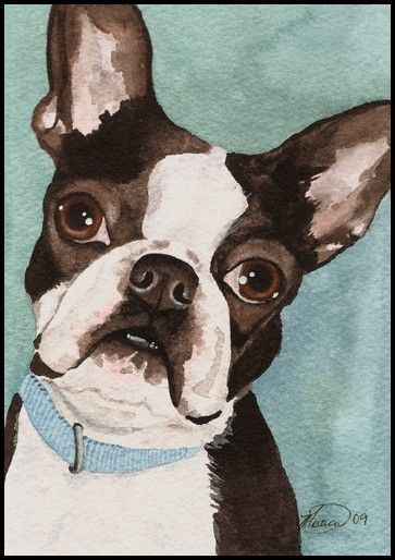 www.pawpaintings.net , Custom pet portrait, Boston Terrier ...