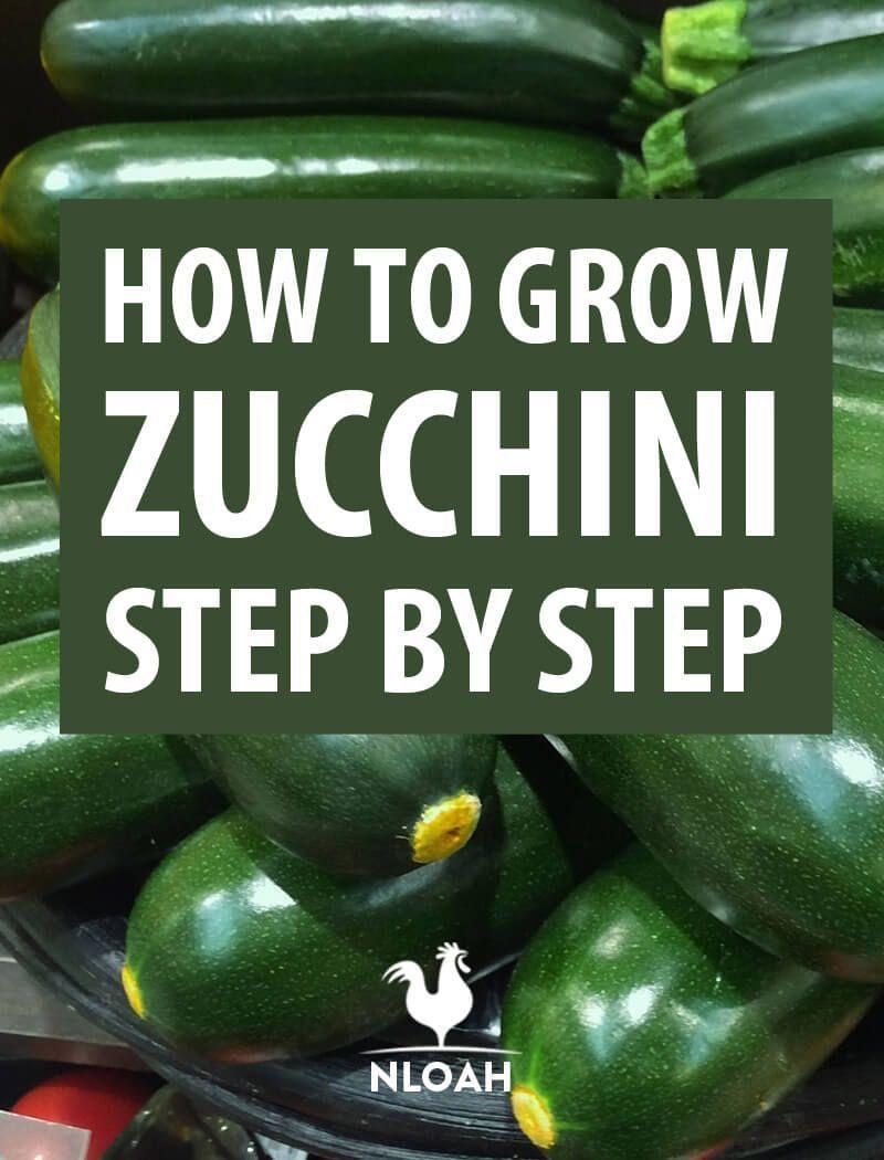How to Grow Zucchini Step by Stepgrow