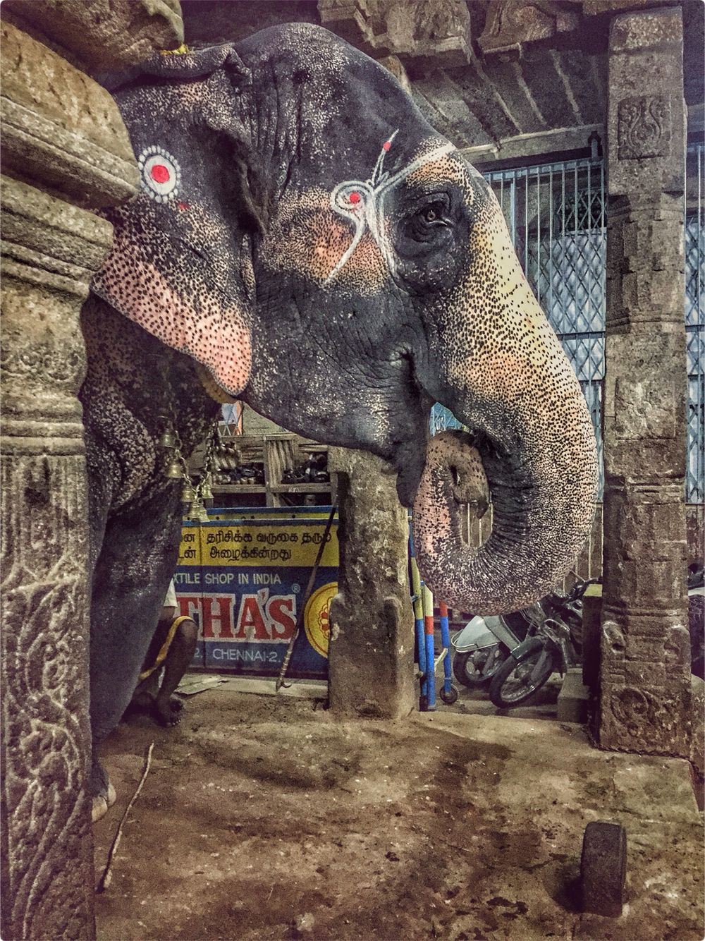 Majestic! Elephants #sounthindia #tamilnadu #incredibleindia #trichy #trichirapalli #templetown