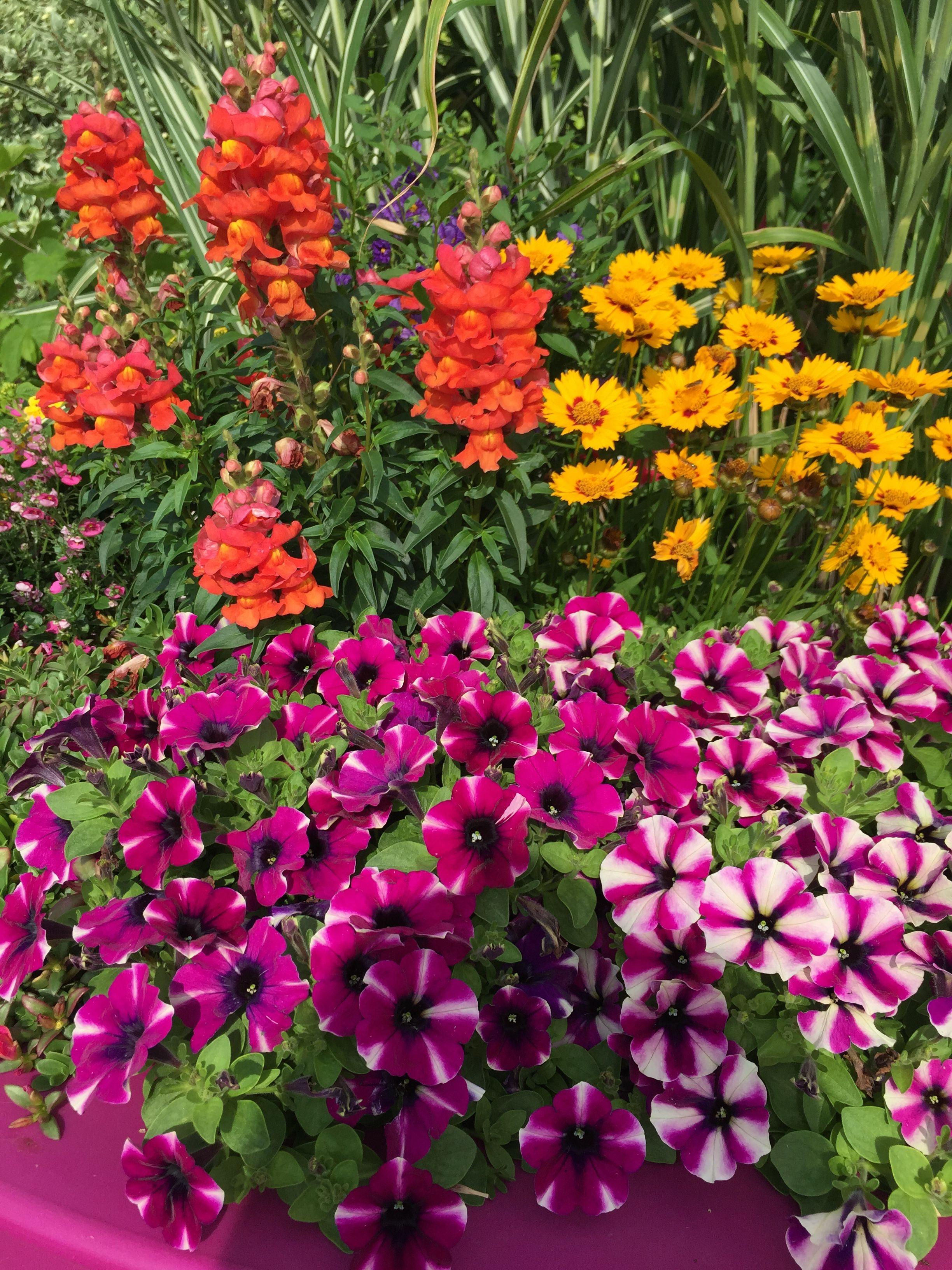 Epingle Par Completement Nad Sur Jardin Fleur Jardins Fleurs