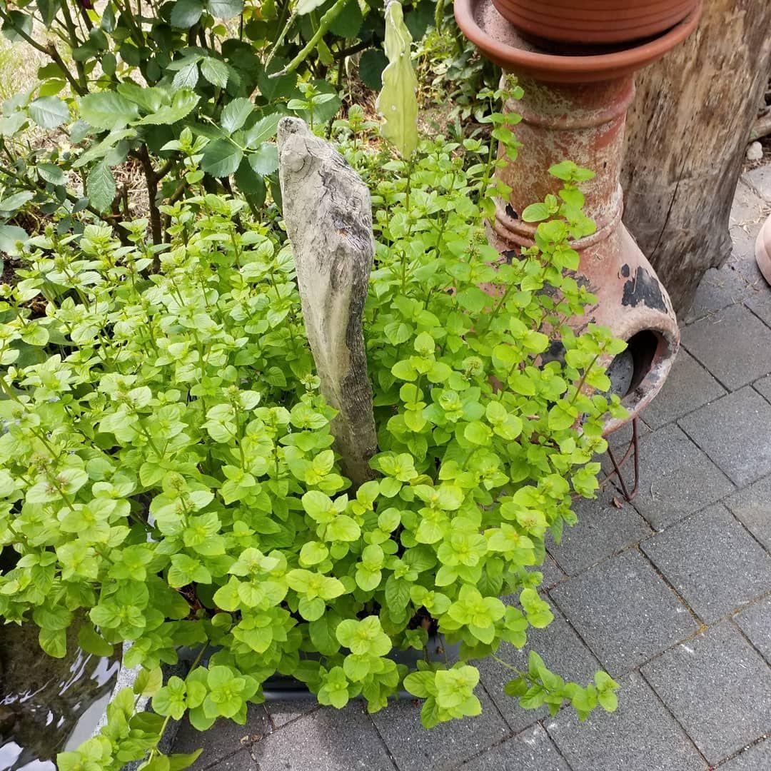 Totes Totholz Eben Und Lebendes Dicht Beieinander Auch Das Ist Garten Auch Baume Beieinander Biotop Das Di Mit Bildern Kompost Garten Reihenhausgarten