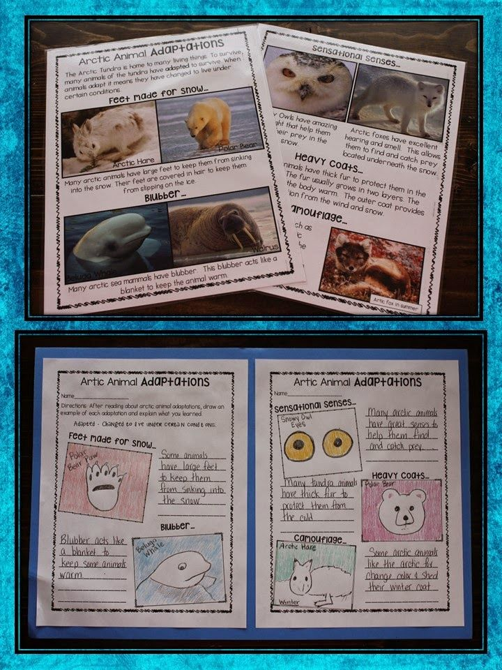 Arctic Animals Animal adaptations activity... Animal