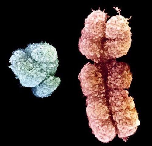 Cromosomas humanos yahoo dating