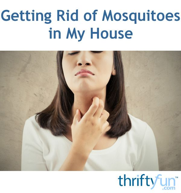Getting Rid Of Mosquitoes In My House Pest Control Insect