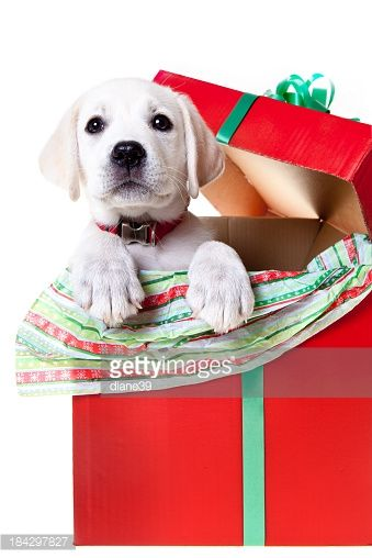 Picture Of Dog In Present Box