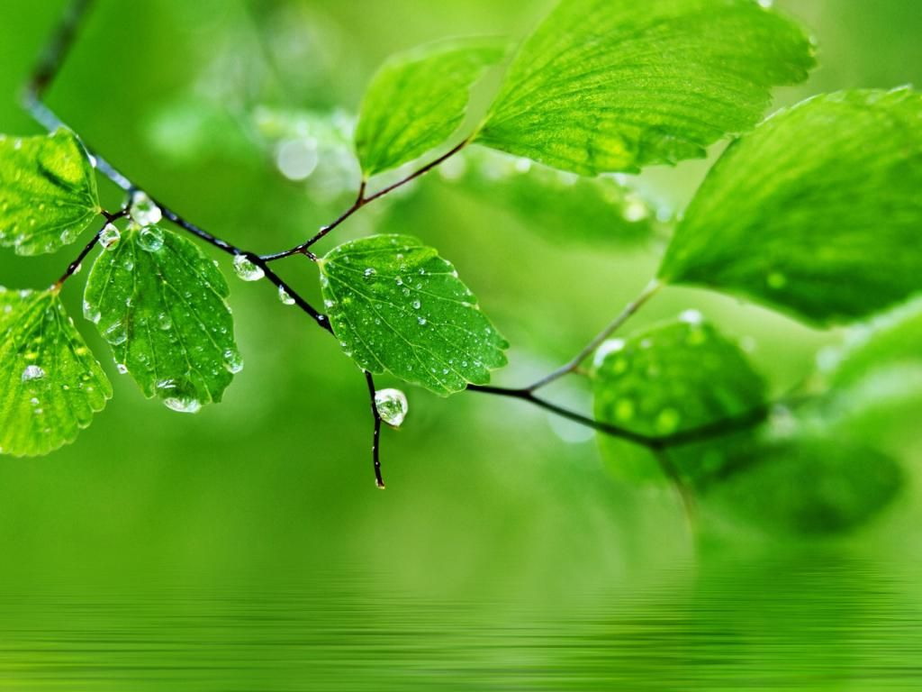 Green Nature Hd Wallpaper For Pc Computer Free Download In